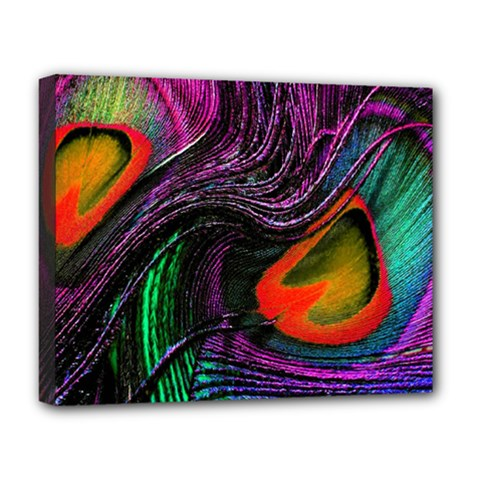 Peacock Feather Rainbow Deluxe Canvas 20  X 16