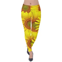 Sunflowers Background Wallpaper Pattern Velvet Leggings by Nexatart