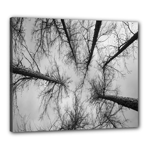 Trees Without Leaves Canvas 24  X 20