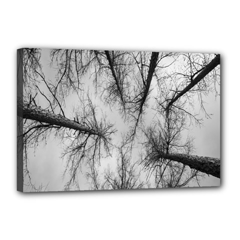 Trees Without Leaves Canvas 18  X 12  by Nexatart
