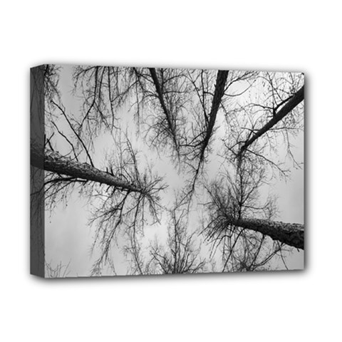 Trees Without Leaves Deluxe Canvas 16  X 12   by Nexatart