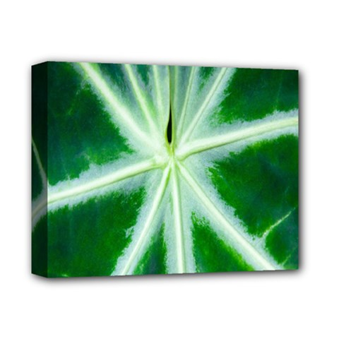 Green Leaf Macro Detail Deluxe Canvas 14  X 11  by Nexatart