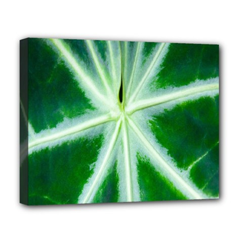 Green Leaf Macro Detail Deluxe Canvas 20  X 16   by Nexatart