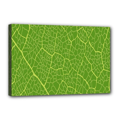 Green Leaf Line Canvas 18  X 12  by Mariart