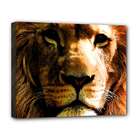 Lion  Deluxe Canvas 20  X 16