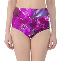 Pretty In Fuchsia High-waist Bikini Bottoms by dawnsiegler