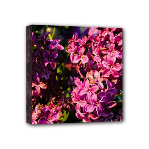 Lilacs Mini Canvas 4  X 4  by dawnsiegler