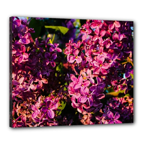 Lilacs Canvas 24  X 20  by dawnsiegler