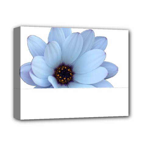 Daisy Flower Floral Plant Summer Deluxe Canvas 14  X 11  by Nexatart
