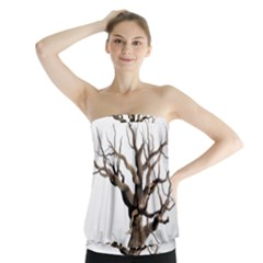 Tree Isolated Dead Plant Weathered Strapless Top