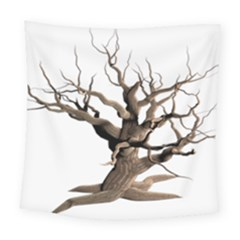Tree Isolated Dead Plant Weathered Square Tapestry (large) by Nexatart
