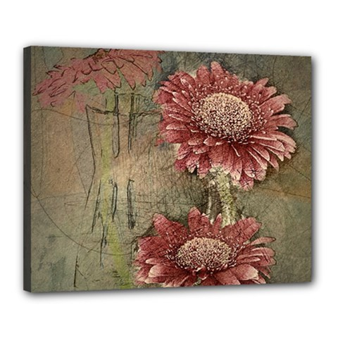 Flowers Plant Red Drawing Art Canvas 20  X 16  by Nexatart