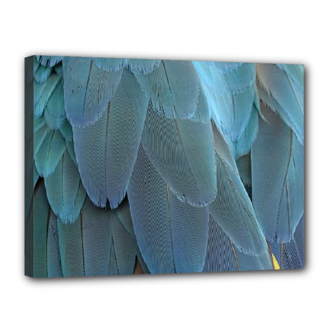 Feather Plumage Blue Parrot Canvas 16  X 12  by Nexatart