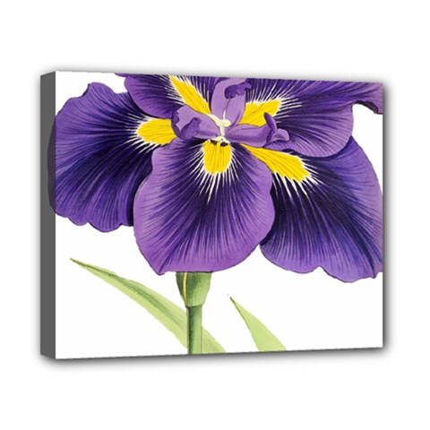 Lily Flower Plant Blossom Bloom Canvas 10  X 8  by Nexatart