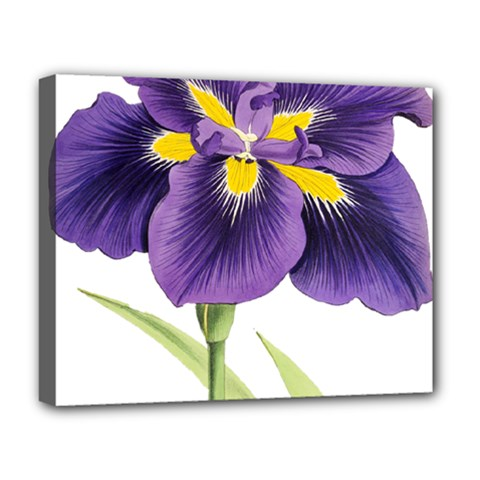 Lily Flower Plant Blossom Bloom Deluxe Canvas 20  X 16   by Nexatart