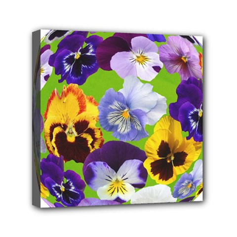 Spring Pansy Blossom Bloom Plant Mini Canvas 6  X 6