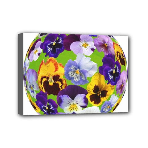 Spring Pansy Blossom Bloom Plant Mini Canvas 7  X 5