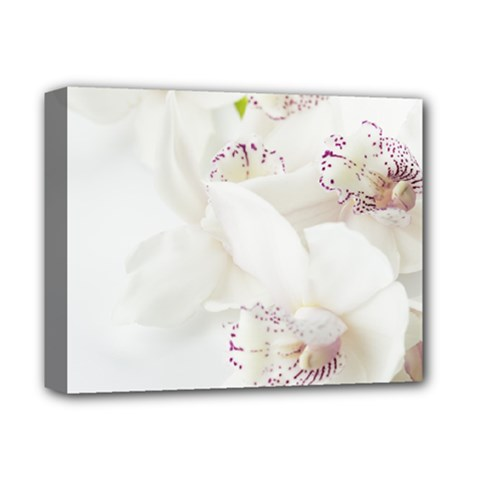 Orchids Flowers White Background Deluxe Canvas 14  X 11  by Nexatart