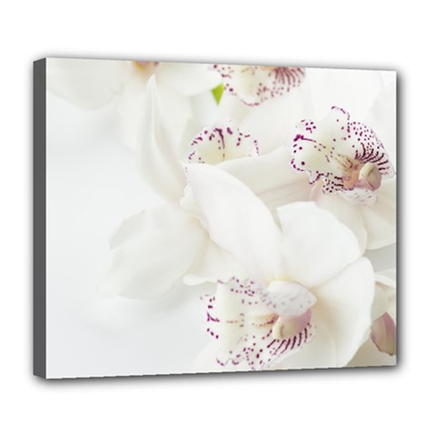Orchids Flowers White Background Deluxe Canvas 24  X 20   by Nexatart
