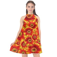 Gerbera Flowers Nature Plant Halter Neckline Chiffon Dress  by Nexatart