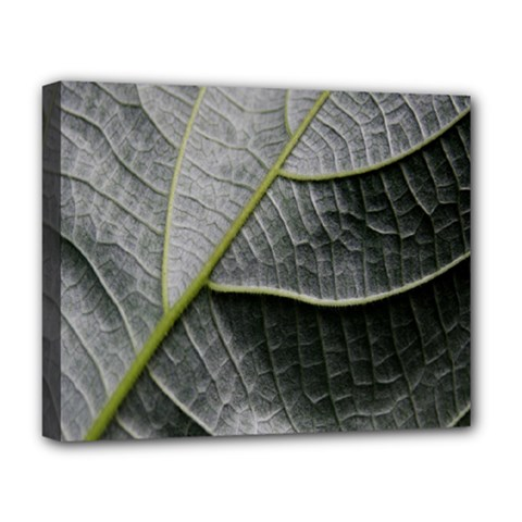 Leaf Detail Macro Of A Leaf Deluxe Canvas 20  X 16   by Nexatart