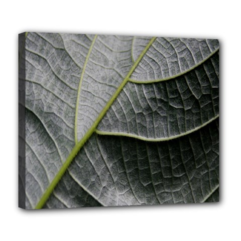 Leaf Detail Macro Of A Leaf Deluxe Canvas 24  X 20   by Nexatart