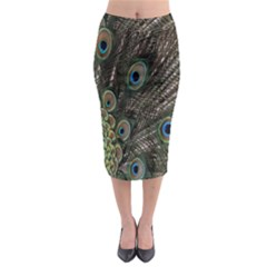 Close Up Of Peacock Feathers Midi Pencil Skirt by Nexatart