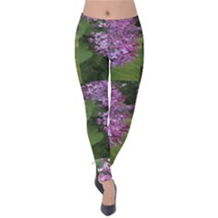 Purple Flowering Shrub Velvet Leggings by SusanFranzblau