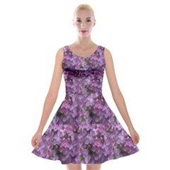 Purple Flowers On Shrub Velvet Skater Dress