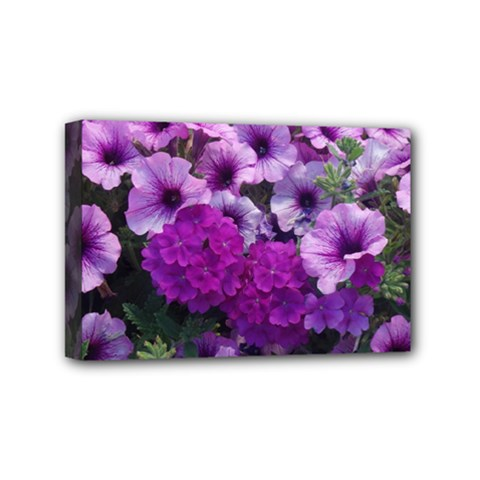 Wonderful Lilac Flower Mix Mini Canvas 6  X 4