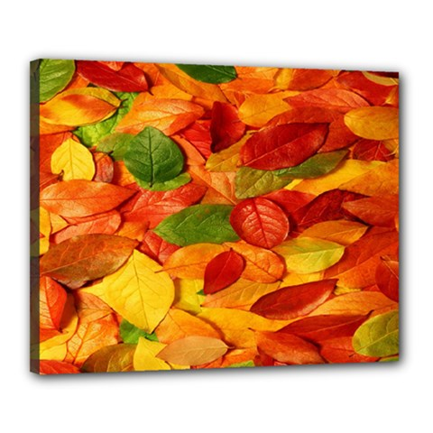 Leaves Texture Canvas 20  X 16