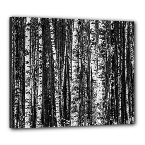 Birch Forest Trees Wood Natural Canvas 24  X 20  by BangZart