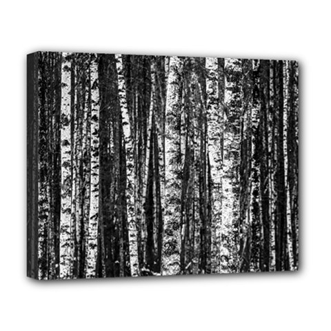 Birch Forest Trees Wood Natural Deluxe Canvas 20  X 16