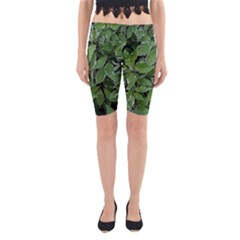Texture Leaves Light Sun Green Yoga Cropped Leggings by BangZart