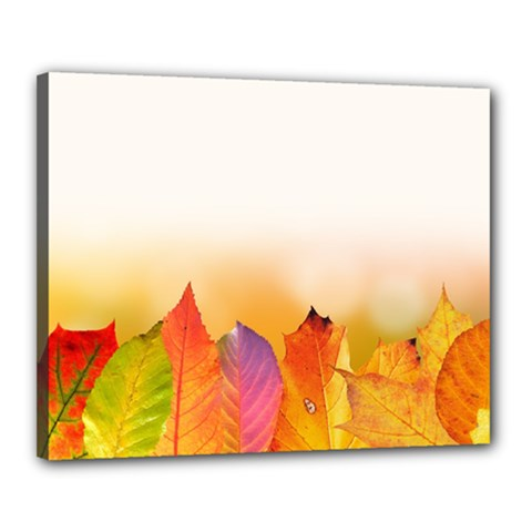 Autumn Leaves Colorful Fall Foliage Canvas 20  X 16