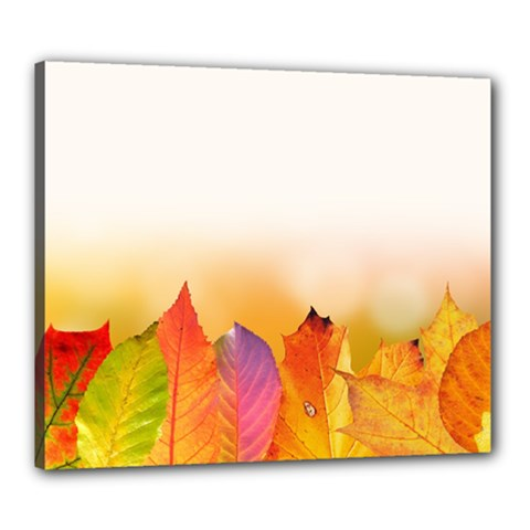 Autumn Leaves Colorful Fall Foliage Canvas 24  X 20  by BangZart