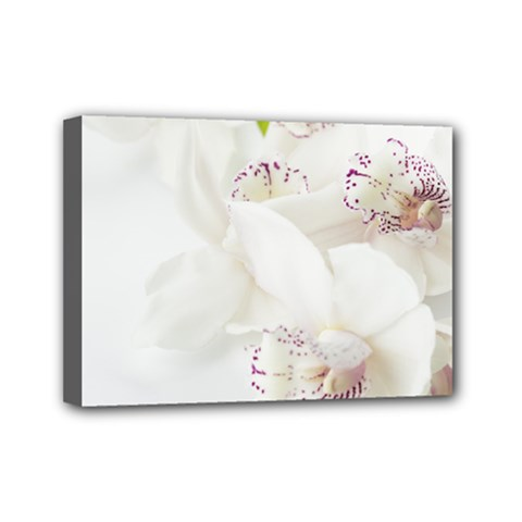Orchids Flowers White Background Mini Canvas 7  X 5  by BangZart