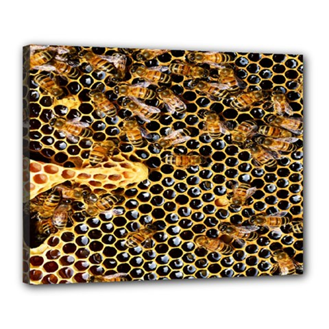 Queen Cup Honeycomb Honey Bee Canvas 20  X 16  by BangZart