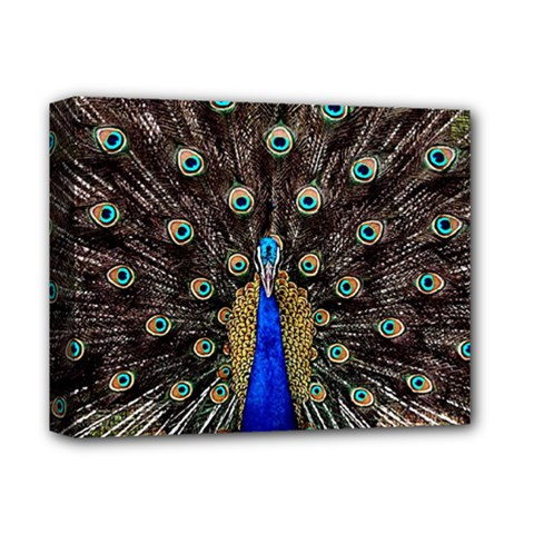 Peacock Deluxe Canvas 14  X 11