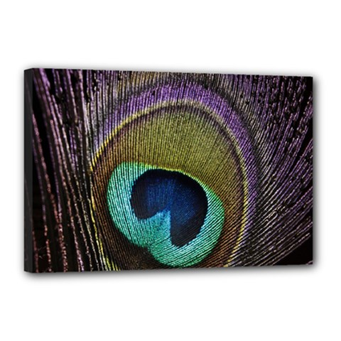 Peacock Feather Canvas 18  X 12