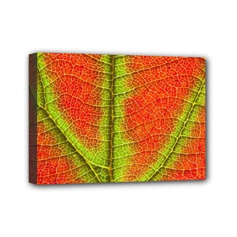 Nature Leaves Mini Canvas 7  X 5