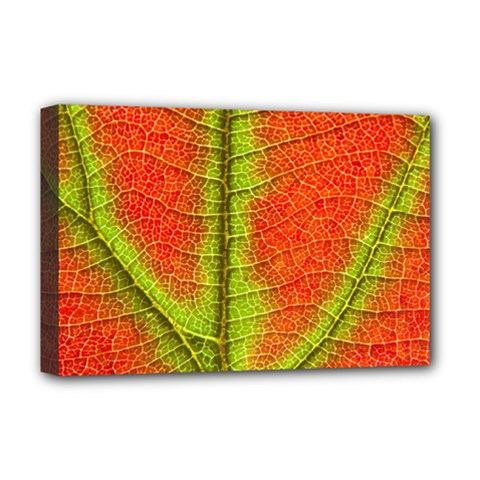 Nature Leaves Deluxe Canvas 18  X 12