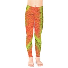 Nature Leaves Kids  Legging by BangZart