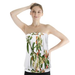 Apple Branch Deciduous Fruit Strapless Top by Nexatart