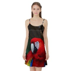 Scarlet Macaw Bird Satin Night Slip