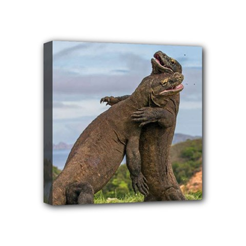 Komodo Dragons Fight Mini Canvas 4  X 4
