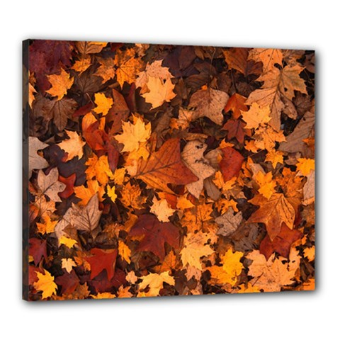 Fall Foliage Autumn Leaves October Canvas 24  X 20  by Nexatart