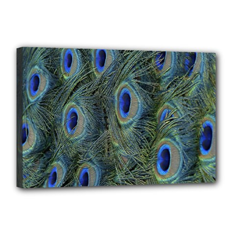 Peacock Feathers Blue Bird Nature Canvas 18  X 12  by Nexatart