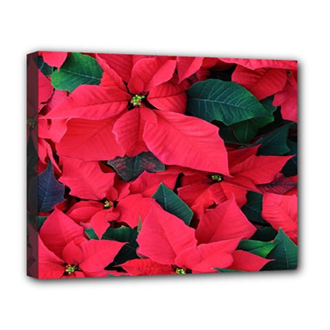 Red Poinsettia Flower Deluxe Canvas 20  X 16   by Mariart