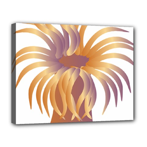 Sea Anemone Canvas 14  X 11  by Mariart